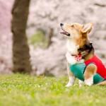オフ会や旅行などでキラリと光る愛犬コーデ。ネーム入りオリジナルウエアはいかが?