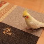 おやつの時間を楽しもう!鳥さんのためのおやつとは?
