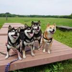 愛犬と行く大きな公園~東京都葛飾区 水元公園~