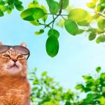 猫の暑さ対策グッズ