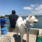 愛犬と夏のお出かけを快適に楽しもう!犬の熱中症対策とお助けグッズ