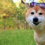 愛犬とキャンプ!ここがおすすめ、ドッグフリーサイト【栃木】