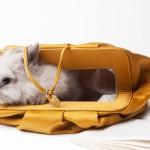 小型犬、猫、ウサギに使える可愛いキャリーバッグ