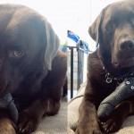 破壊王な愛犬に捧げる!アンブレイカブルなおすすめ玩具
