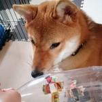 犬用知育玩具を家にあるもので手作り~簡単楽しい知育玩具の作り方~