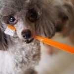 気になる臭い…愛犬の口臭の原因と、解決するには何を見直す?オススメグッズやサプリもご紹介!