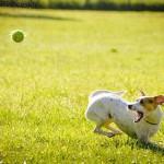 軽井沢で愛犬と涼しく気持ちよく♬愛犬も飼い主も大満足のおすすめ2大スポットをご紹介!