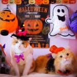 猫と楽しくハロウィンパーティはいかが?