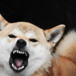 電話や来客時、犬が吠えにくくなる3つの対応法
