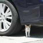 猫が猫好きを呼ぶのか、猫好きが猫を呼ぶのか。~ボンネットに入ってしまった子猫の救出騒動~