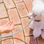 愛犬のしつけを楽しく遊び感覚でできる、クリッカートレーニングのすすめ◎
