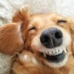 愛犬は今何を考えているのだろう?犬の表情で、気持ちがわかる!