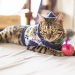 猫の服について考えよう~猫に服を着せる理由~