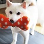しつけと遊びで使い分け。わが家のお気に入り犬用おもちゃ3選