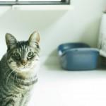 猫がトイレを失敗する原因って?猫多頭飼いのトイレ対策
