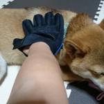新米飼い主が選んだ、愛犬のブラッシングに使っているブラシ3選
