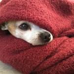 そろそろ冬支度の季節です。寒さが苦手な犬の防寒対策を!