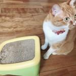 ボロボロの壁にさよならできる!猫の爪とぎの理由とおすすめの爪とぎをご紹介