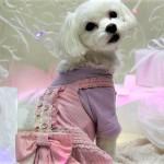 犬だっておしゃれしたい!機能性やお揃い服など!おすすめ犬服3選!