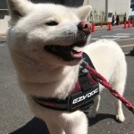おしゃれでかっこいい「EZYDOG」のアイテムで愛犬とお出かけしませんか?