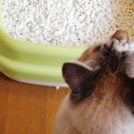 茶トラボーイ「オム君」の血尿事件簿~猫のおしっこの病気について~