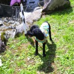愛犬と大自然でゆっくり~愛犬と自然あふれる岐阜へ旅行しよう!~