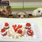 3ワンで楽しく!手作りケーキで美味しく!愛犬とおうちでクリスマスパーティー!