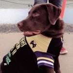 学校に通っても解決しないこともある…愛犬の訓練学校奮闘記