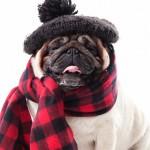 愛犬にも保湿ケアを!皮膚トラブルや静電気を防ぐための犬用ケア用品11つ紹介