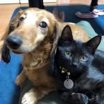 イヌとネコの違いについて比べてみよう!~暮らし編~