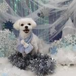 愛犬を可愛くカッコよく写真に残そう!クリスマス&お正月撮影会!