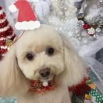 愛犬とクリスマスを楽しみたい!犬用クリスマスケーキはどこで買おう?