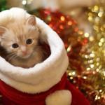 愛猫と過ごすクリスマス、クリスマスツリーを飾る時の注意点とおすすめツリー5選!