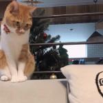 ペットがいる家にとってソファは消耗品!?ペット対応ソファの使用感を紹介