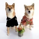 手作りおせちで愛犬の新年の幸せを願おう!オススメお取り寄せおせち3選のご紹介も♪
