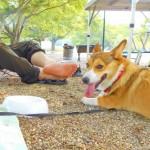 わんこ連れキャンプ~ビギナー向け~愛犬とのキャンプにはどんな持ち物がいるのかな?をご紹介