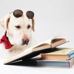 犬好きさんにオススメしたい本6選