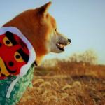 愛犬と過ごすお正月~福袋や年賀状、おせち料理を楽しもう~