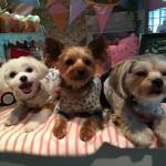 3ワンで駒沢へお出かけ!駒沢大学駅近辺、愛犬とのおすすめスポットをご紹介!