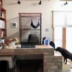 犬や猫に理想的な部屋って?我が家のドッグ&キャットスペースを紹介します!
