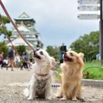 犬の飼い主として守りたい、お散歩やドッグランでのマナー