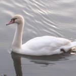 初心者バードウォッチャーが千葉県の野鳥の聖地・手賀沼に行ってきました!