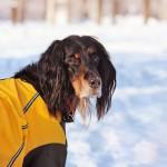 愛犬と雪遊びを楽しもう!~雪の遊び方体験談とおすすめのドッグウェア~