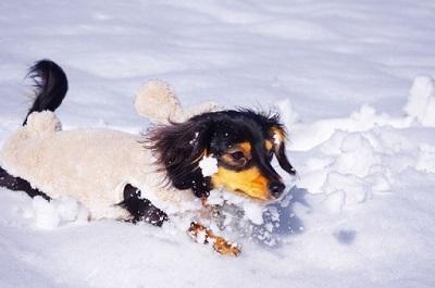 雪遊びをする犬