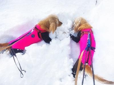 穴掘りに夢中の愛犬達