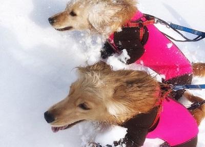 雪の中を駆け抜ける愛犬達