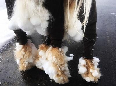 雪遊びをした後の愛犬の被毛についた雪玉