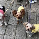 初詣人気トップ3にランクインする「川崎大師」へ、愛犬3ワンでおでかけ!