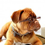 愛犬のことをもっともっと知りたい人におすすめ。通信講座で取得できるペットの資格をご紹介!