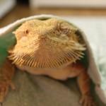 爬虫類や両生類と一緒に暮らしてみたい!購入場所やイベントをご紹介!